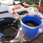 dye-buckets